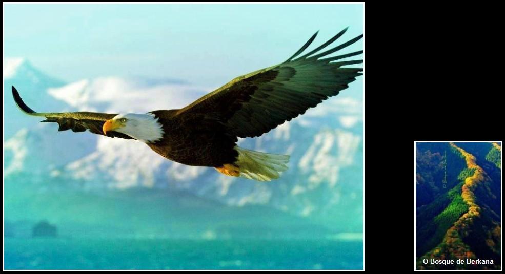 Dê A Quem Você Ama Asas Para Voar Raízes Para Voltar E: As Melhores Imagens: Asas Para Voar