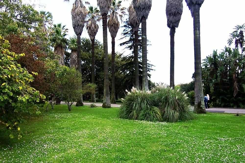 imagens de jardim tropicalImagem captada a 8 de Abril de 2006